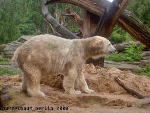 Photo: Eisbaerchen Knut ist auf Anlageninspektion ;-)