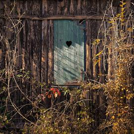 20181013_DSC_6812 by Zsolt Zsigmond - Buildings & Architecture Architectural Detail ( foliage, window, autumn, house, wall )