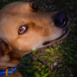 BOGART by Ikko Calzado - Animals - Dogs Portraits ( outdoors, dog, pet )