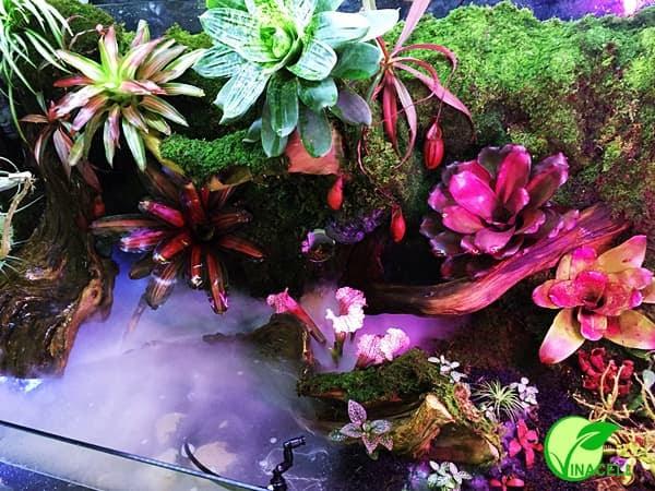 Hồ bán cạn nên Lựa chọn các loài cây chịu ẩm trang trí
