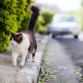 by Felipe Mairowski - Animals - Cats Portraits
