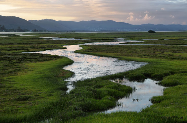 Knysna wetlands at sunset.