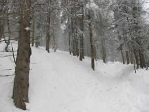 Photo: 12.Podejście na Lubań. Zero ludzi. Cisza i las.