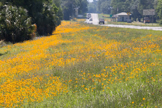 Photo: lots and lots of wildflowers
