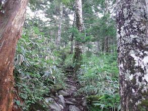 樹林帯の石の道を登り