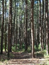 Photo: CLCT Fairhaven trails