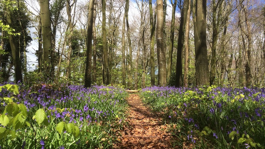 Outdoor Sensory Walks For Nature Therapy