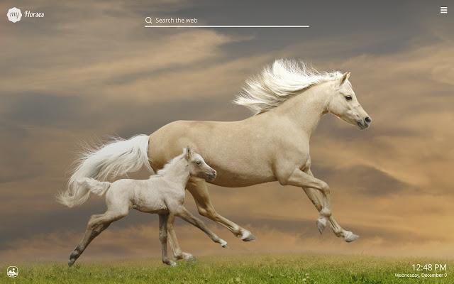 My horses beautiful horse hd wallpaper chrome web store altavistaventures Image collections