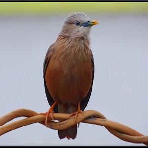 birdADAonwirexx.jpg