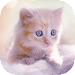 Cute Kitten Live Wallpapers Icon