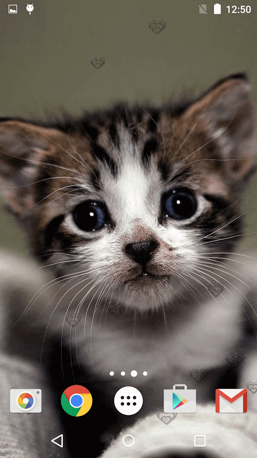 Cute Kittens Live Wallpaper Android Apps On Google Play