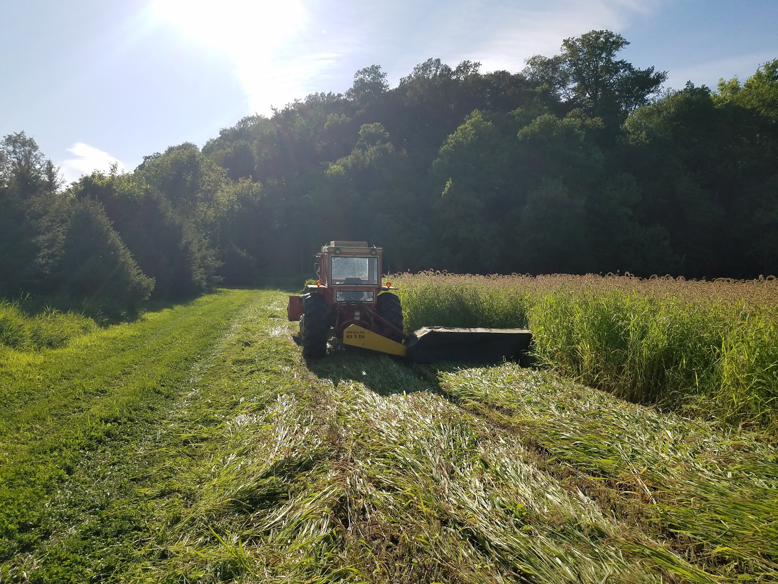 Tractor mowing tall, long grass.
