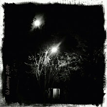Photo: Grateful for the moon and her twin streetlight.