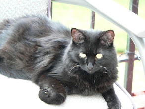 Photo: My black girl has some white whiskers.  Isn't that cute?
