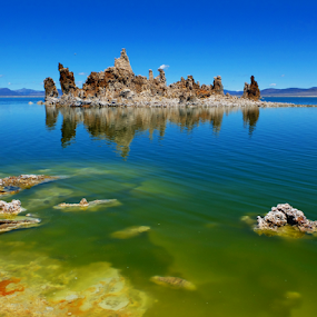 Green Waters by Megan Richardson - Landscapes Waterscapes ( water, waterscape, algae, rocks, island )