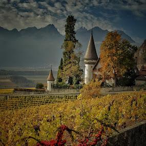 Herbst im Wallis by Konstanze Singenberger - Landscapes Mountains & Hills ( clouds, herbst, reben, mountain, autumn, vineyards, weinberg, castle )
