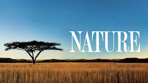 Nature thumbnail