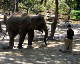 """Photo: Is the elephant laughing at the handler (mahout?) who mans the """"pooper-scooper"""" in the elephant pen..??"""