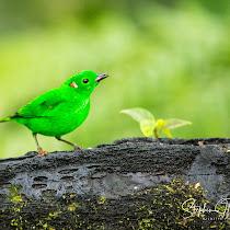 The Colour Green