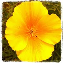 Photo: Nice blossomed yellow flower #intercer #flowers - via Instagram, http://instagr.am/p/LfgE-Kpfv_/