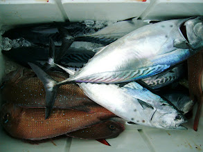 Photo: ほれほれ、真鯛とカツオ!