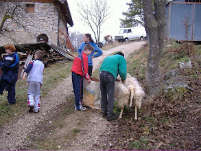 Photo: i bambini ci aiutano a cernire la lana