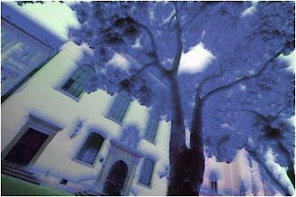 Photo: u snu videh drvo...