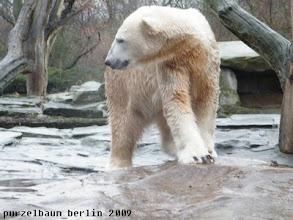 Photo: Knut stromert ueber die Anlage ;-)
