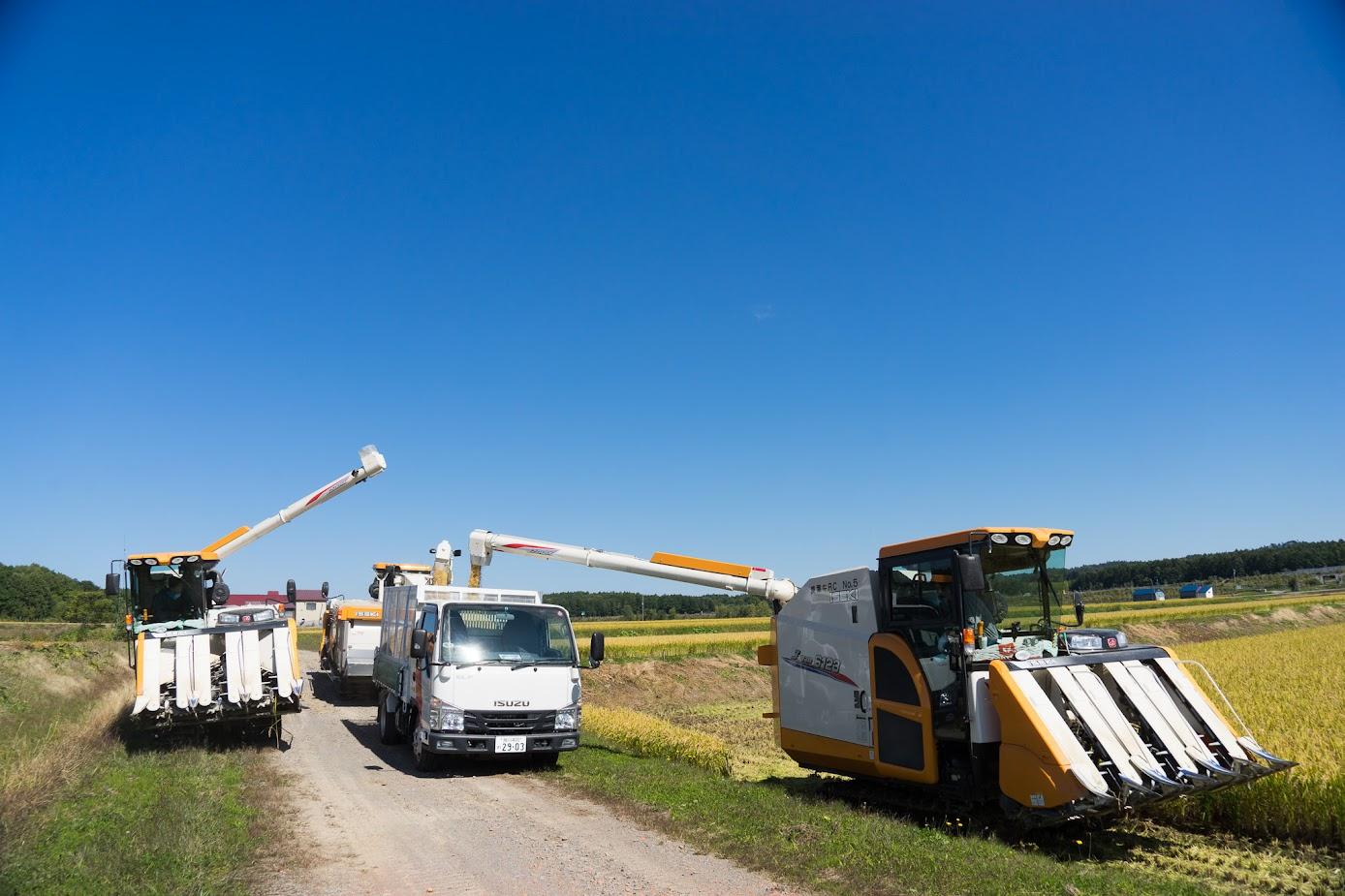 集められた籾は4トントラックでライスセンターへ