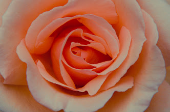 Photo: Not my typical type of post, but this flower was so beautiful!  #macromonday