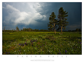 Photo: Cold, Wet, and Windy - Tips for Photographers Shooting in Miserable Weather  What kind of nasty conditions have you shot in? And what do you like best about shooting in difficult weather?  This is a blog post that took me some time to write, but I think it's a good one. So, I thought I'd share it with all of you. I love shooting in stormy conditions because storms often bring amazing light and brilliant colors.  http://www.photographybyvarina.com/photography/blog/cold-wet-and-windy-tips-for-miserable-nature-photographers  What about you? What kind of nasty conditions have you shot in? And what do you like best about shooting in difficult weather?  #photographydiscussion  #theexperienceproject  #photographytips