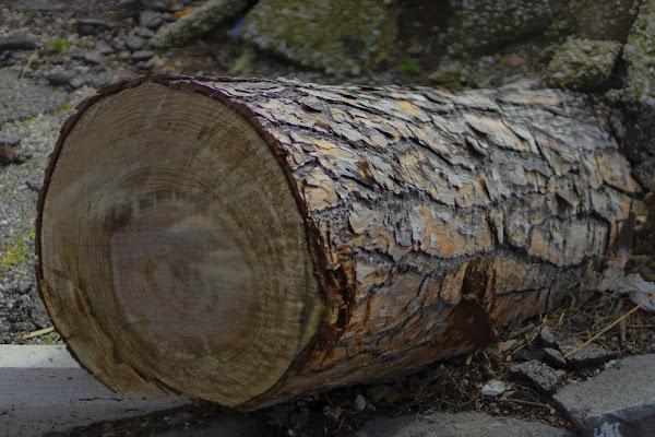 Wood di Alessandro Isaia