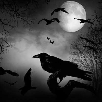 Pajaro Tue tue volando de noche