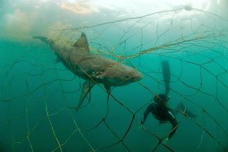 Photo: Credit: Fiona Ayerst Underwater Photography