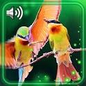 Amazing Birds Live Wallpaper icon