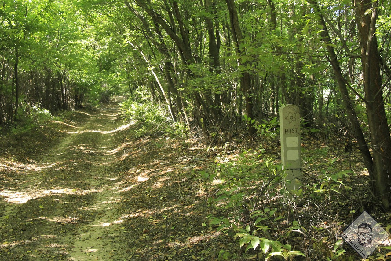 KÉP / Árnyékban egy erdősávban