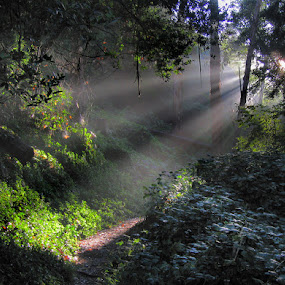 Sunbeams at Dawn by Gary Pope - Landscapes Forests