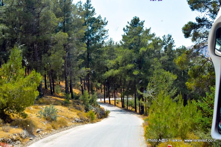 Путешествия и экскурсии в Израиле. Дорога в лесу Бирия.