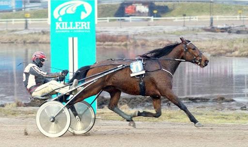 Mika Forss on ollut tuttu näky Incredible Ironmanin rattailla, tällä kertaa hänen ja Marjo Kivimaan tallin hevosta ohjastaa Santtu Raitala. Kuva: Merja Ahola-Turpeinen.
