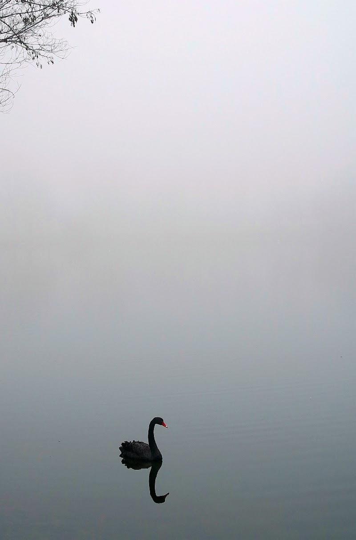 black swan di Paolo Zanoni