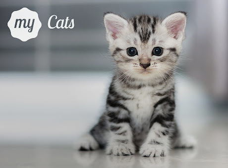 My Cats - Adorable Cat & Kitten Wallpapers