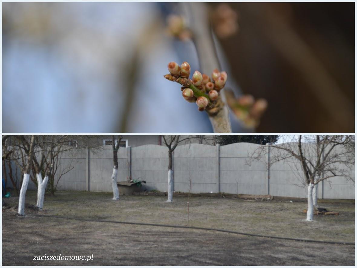 pobielenie drzew