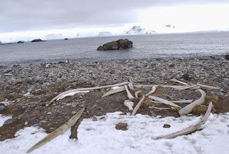 Photo: Whale bones