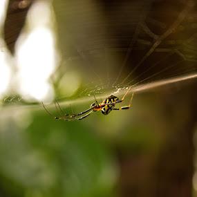 by Shashank Ramesh - Abstract Macro ( macro, nature, web, spider, earth, yellow, insects, closeup )