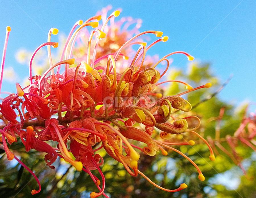 Orange flower by Tupu Kuismin - Nature Up Close Flowers - 2011-2013 ( bush flower nature garden orange )