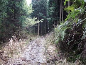 ここからは林道