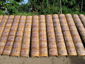 Photo: rice paper spring roll wrappers drying in the sun