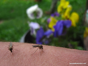 Photo: Study of a moquito bite 2