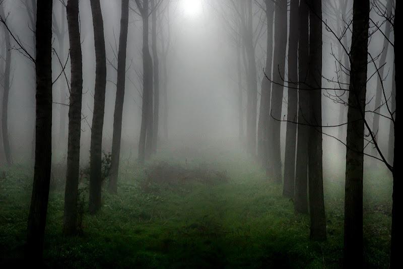 Nel bosco di Fotodiale