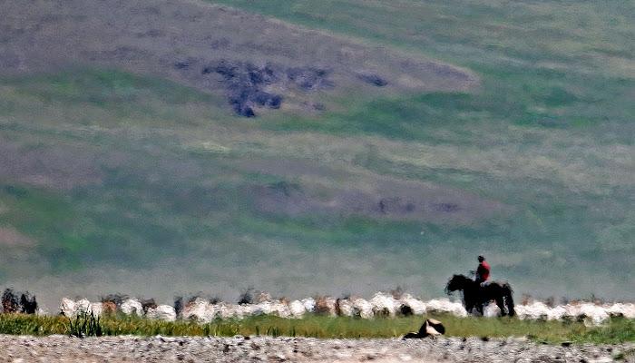 Pastore con le pecore di Alexx70